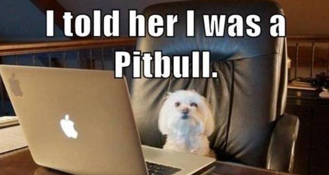 onlinedatingdog